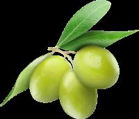 olive_lucarelli_sfondo1gb