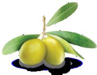 olive_lucarelli_sfondoh1
